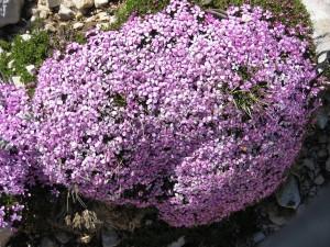 05-Blumen