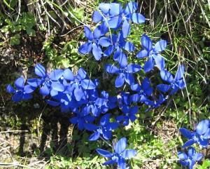 12-Blumen